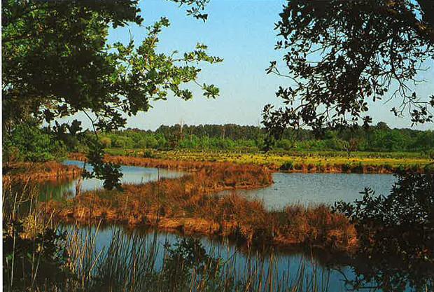 Réserve naturelle d'Ares-Lege (Gironde)